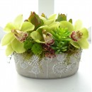 Cymbidium Orchids - they're back!!
