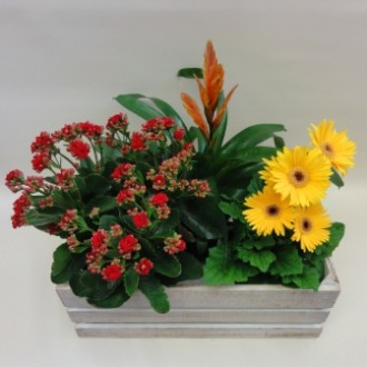 Mixed Plant Basket