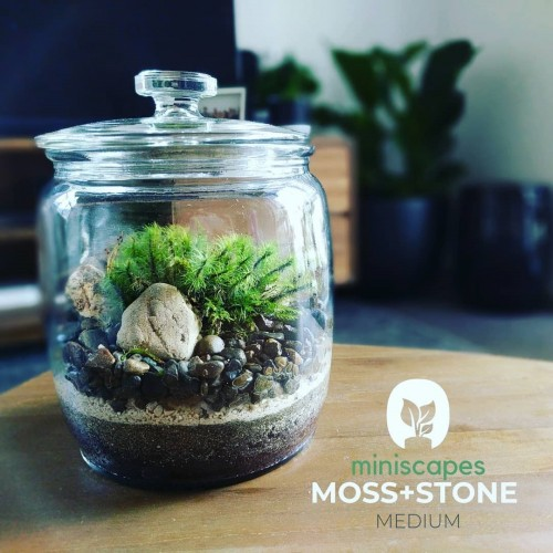 Miniscapes -Moss and Stone